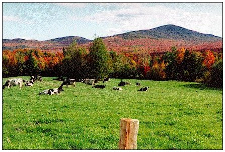 cows on field against red mountains
