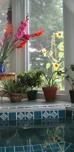 gladiolus and sunflowers over tiled hot tub